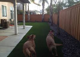 Good Backyard Pets Prolawn Turf Product Prolawn Turf