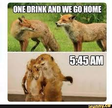 Meme Fox - funny bar meme free alcohol memes cocktails bar and grill