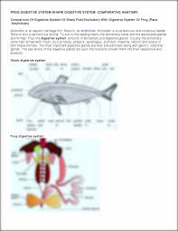 shark digestive system diagram download wiring diagram