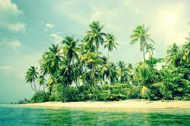 tropical island with palm trees on the stock image image of