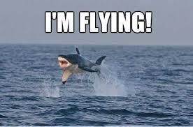 Shark Meme - the 21 funniest shark memes ever gallery worldwideinterweb