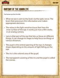 anatomy of the human eye u2013 free 4th grade science anatomy sheet