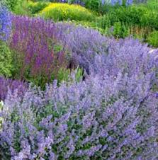 perennial flowers for a stunning design drought tolerant summer