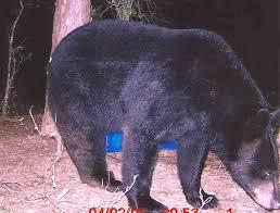 Texas wildlife images 219 best texas wildlife images wildlife parks and jpg