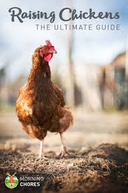 Guide To Raising Backyard Chickens by The Complete 7 Step Guide To Raising Chickens In Your Backyard