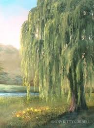 how to paint a weeping willow search 101