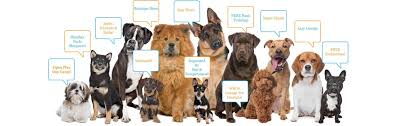 House Dogs by Dog Boarding House Rockville Md Dog Daycare Rockville Md