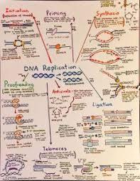 utsw cus map 158 best biology images on science ap biology
