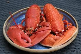 comment cuisiner un omar cuire un homard