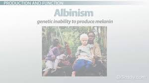 what is melanin definition production u0026 function video