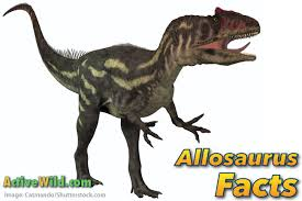allosaurus facts kids u0026 adults pictures information u0026 video