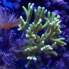 Live Rock Aquascaping Topic Of The Week September 11 Aquascaping W Live Rock Reef