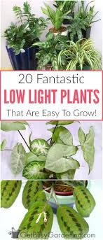 good low light plants 20 low light indoor plants that are easy to grow houseplant low