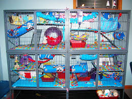 Cheap Rat Cage Double Wide Ferret Nation Cage Ferret Ferret Cage And Chinchillas