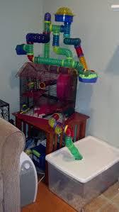 Hamster Cages Petsmart 270 Best Hamsters Images On Pinterest Hamster Stuff Dwarf