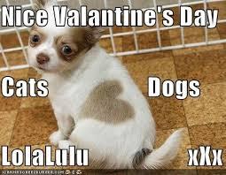 Funny Xxx Memes - nice valantine s day cats dogs lolalulu xxx cheezburger funny