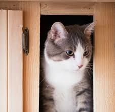 how to remove odor from wood cabinets cat urine odor on wood cabinets thriftyfun