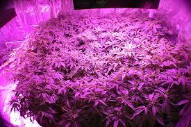 best led grow lights for marijuana good ideas grow l eflyg beds
