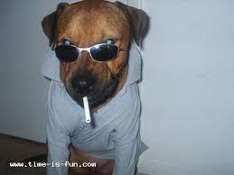 boxer dog jokes 10 funny dog jokes dogsarethecoolest