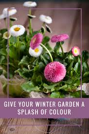 the best plants to give your winter garden a splash of colour a