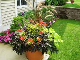 rock garden with full sun plants can spruce trees and garden trends