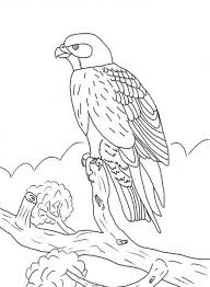 kids falcon bird coloring pages animal coloring pages