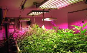 top led grow lights tips for choosing the best led grow lights for your indoor garden