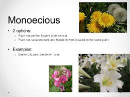 parts of plants and their functions ppt video online download