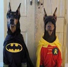 Batman Robin Halloween Costumes Girls 30 Hilarious Pet Halloween Costumes Huffpost