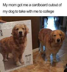 Weekend Dog Meme - 50 furry dog memes to bring some funny into your day cutesypooh