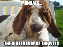 Funny Puppy Memes - puppy meme ruff day giggles pinterest puppy meme funny puppy