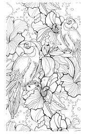 free coloring page coloring difficult parrots coloring
