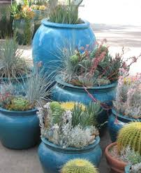 amazon succulents 226 best retail plant displays images on pinterest flower