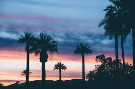palm trees sunrise sunset dusk u2014 bossfight