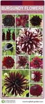 Burgundy Flowers Burgundy And Gold Wedding Inspiration And Ideas Wedding Ideas