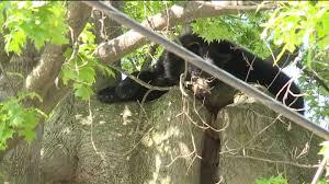 bear wnep com