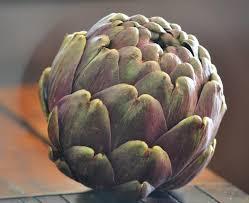 cuisiner les artichauts violets quiche de brousse aux artichauts violets la cuisine d agnèsla
