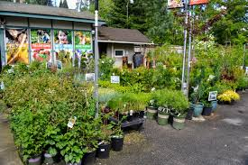 weeding wild suburbia all about the outlaw gardener stopping by bellevue nursery