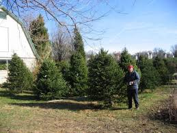 six places to chop down your tree and six to eat mayne u0027s tree farm