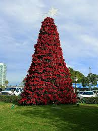 file christmas poinsettia tree in san diego jpg wikimedia commons