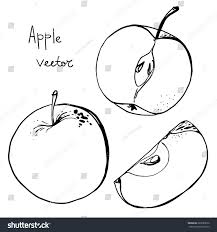 apples line drawn on white background stock vector 287683076