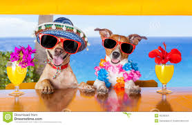 cocktail dogs stock photo image 45230354