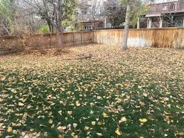 Fall Cleanup Landscaping by Spring And Fall Clean Up U2014 Hillman Lawns Llc Lawn Mowing And