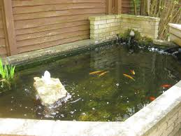 Catfish Backyard Pond by Goldfish Pond Tips Diy Stock Tank Pond Pinterest Goldfish Pond