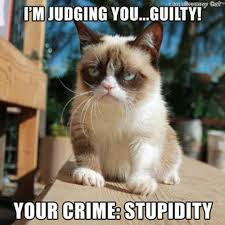 No Grumpy Cat Meme - 100 best grumpy cat images on pinterest grumpy cat funny things