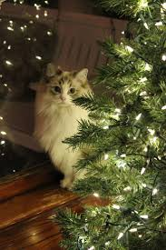 180 best cats with christmas lights images on pinterest