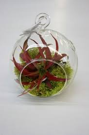 terrarium plants fruit basket flowerland