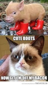 Meme Cute - the adventures of piggy and grumpy cat grumpy cat cat and meme