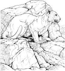 free jaguar coloring pages