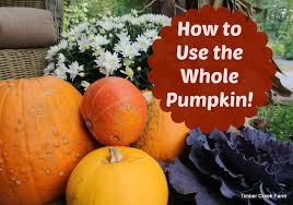 how to use the whole pumpkin timber creek farm